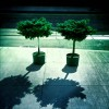 potted_trees1